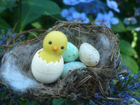 The Nest by Ailsa